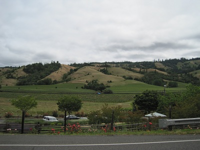 lush vineyards dot the landscape around mendocino and fort bragg